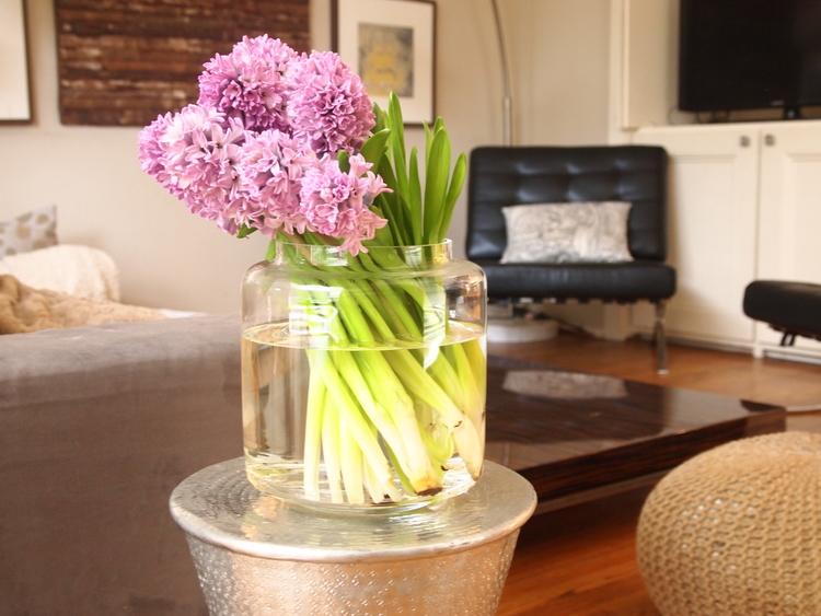 Hyacinth for Spring