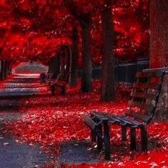 erd bench.jpg
