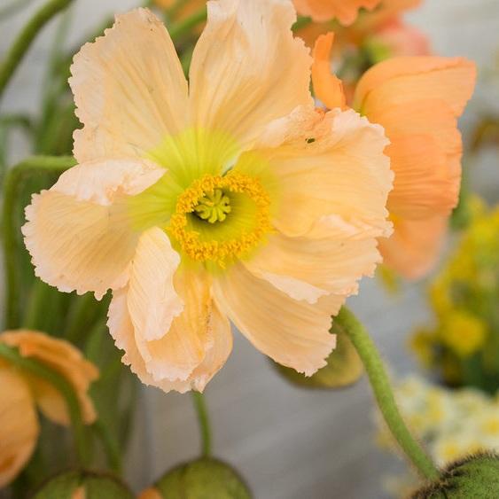 Piedmont Wholesale Flowers Durham, NC  www.piedmontwholesaleflowers.com