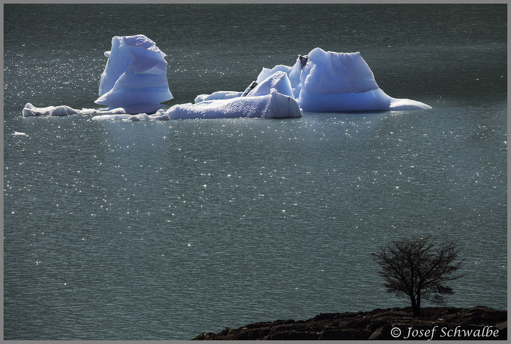 Iceberg and Bush