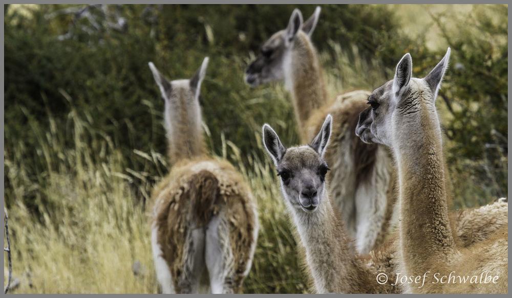 Patagonia08.jpg
