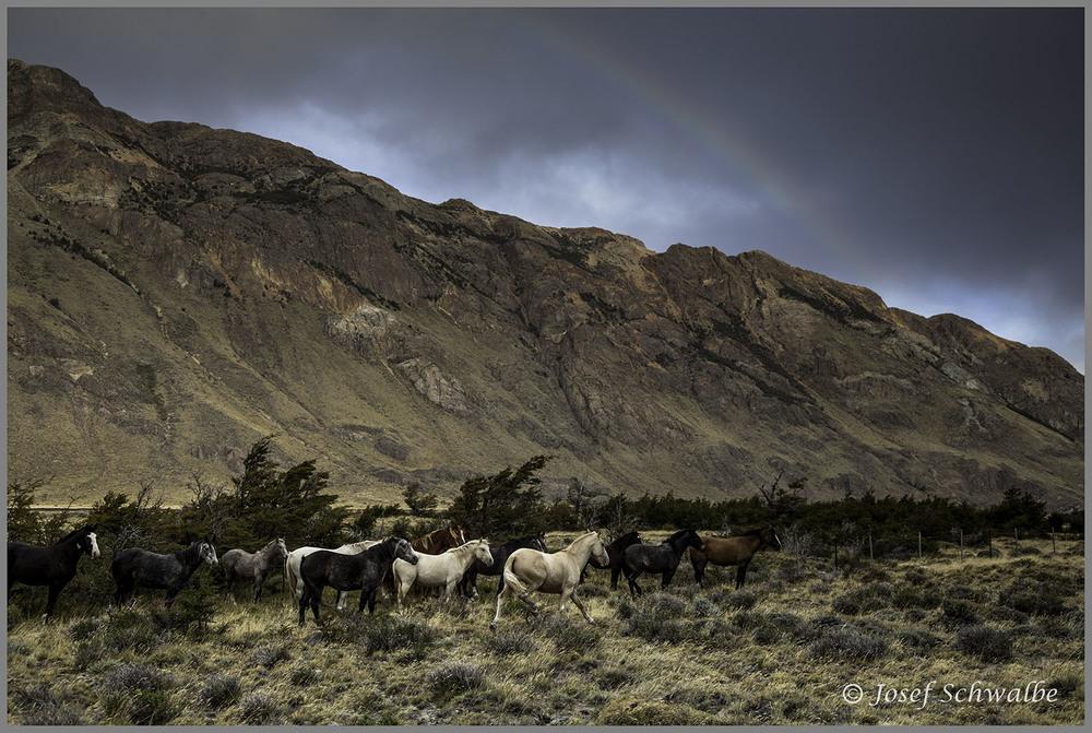 Rainbow Horses