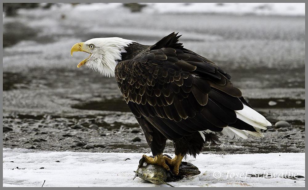 Alaska35.jpg