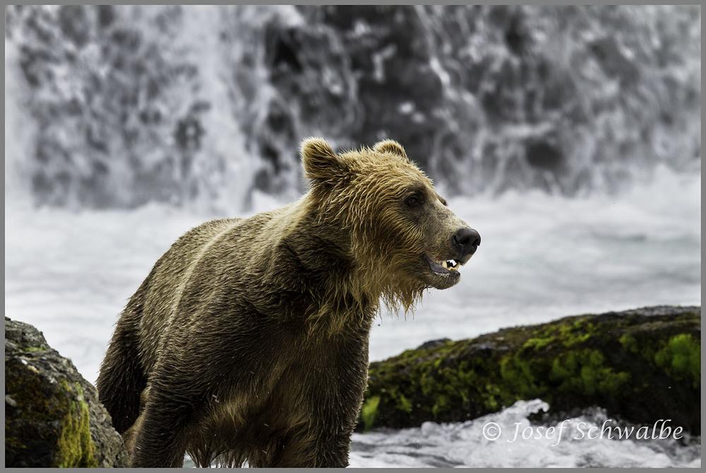 Bear and Falls