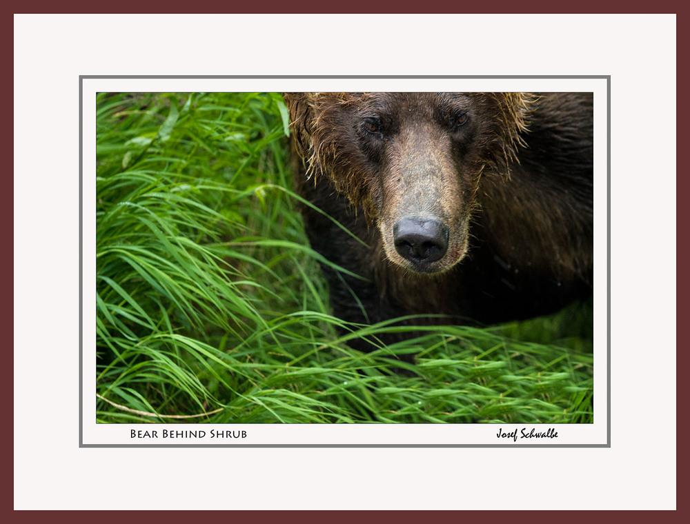 BrownBear03.jpg