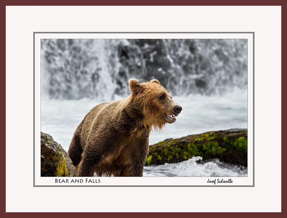 BrownBear12.jpg