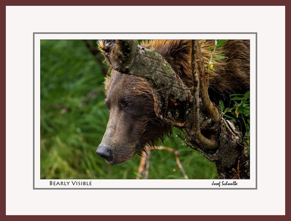 BrownBear14.jpg