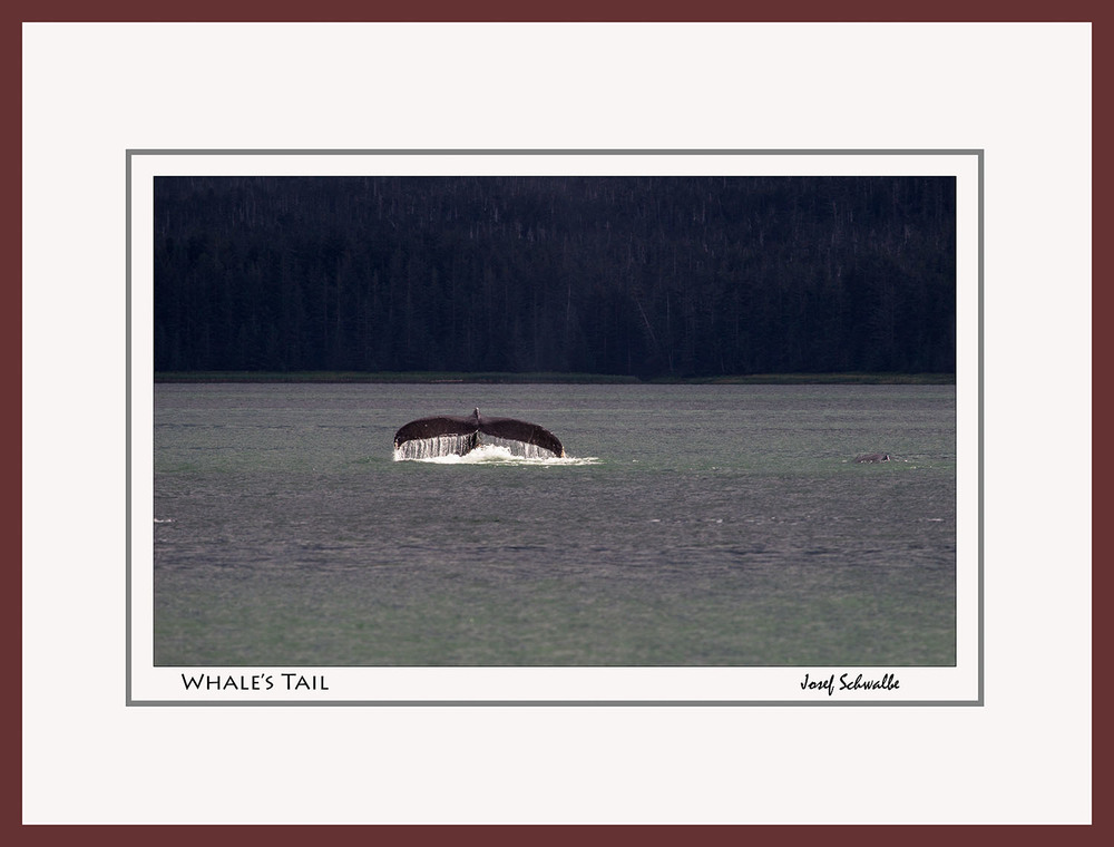 Whale01.jpg