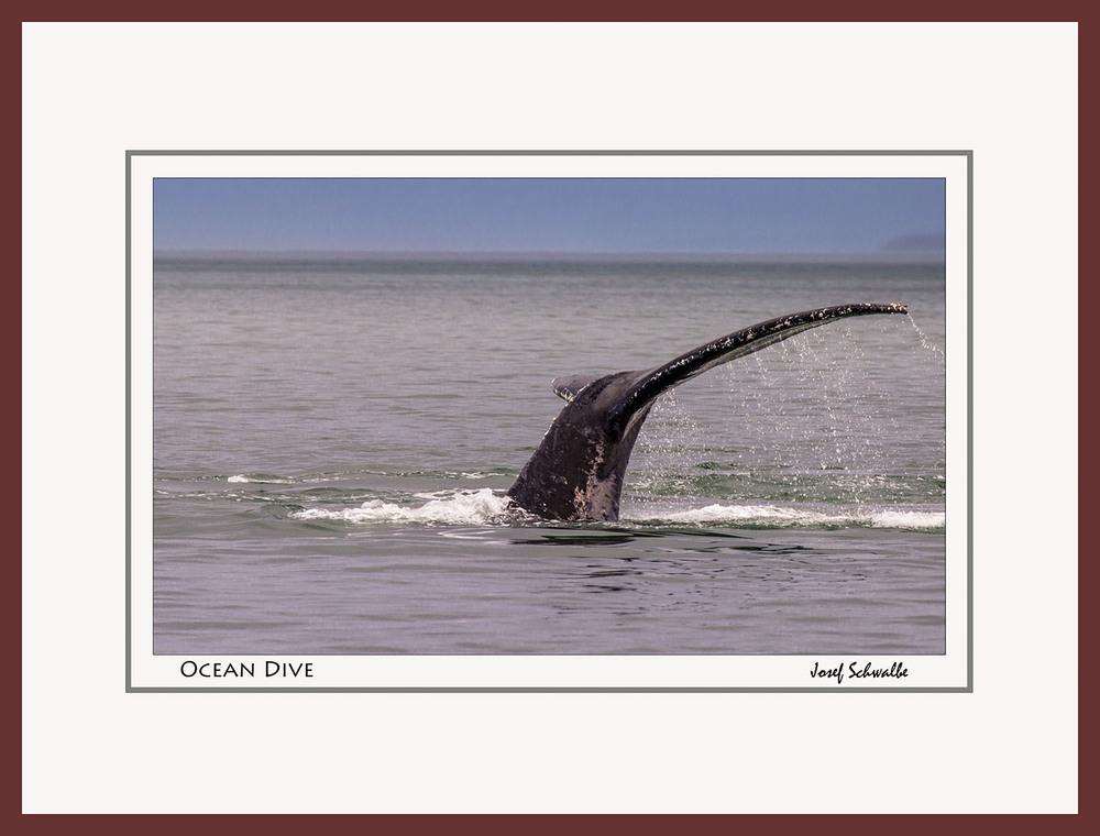 Whale04.jpg