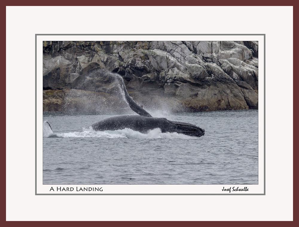 Whale07.jpg