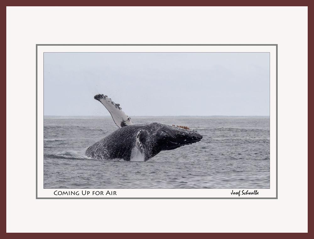 Whale08.jpg