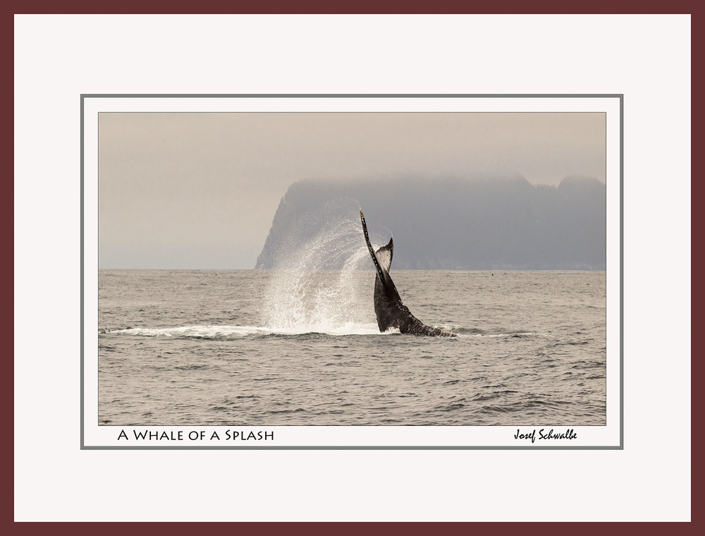 Whale09.jpg