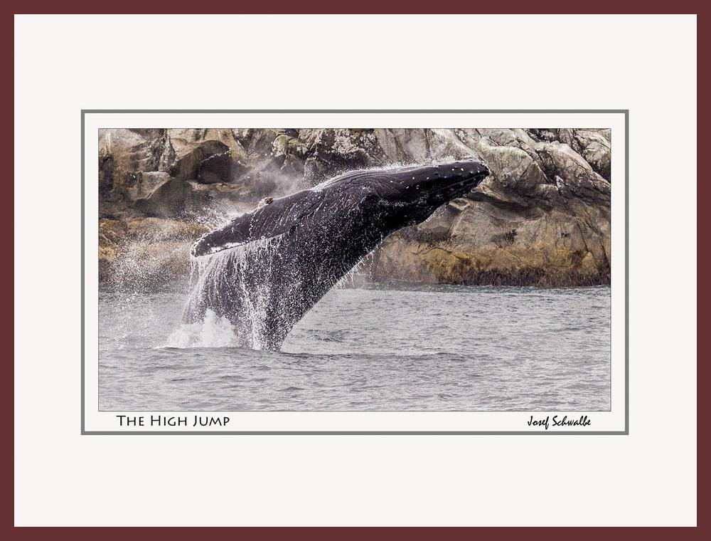 Whale10.jpg