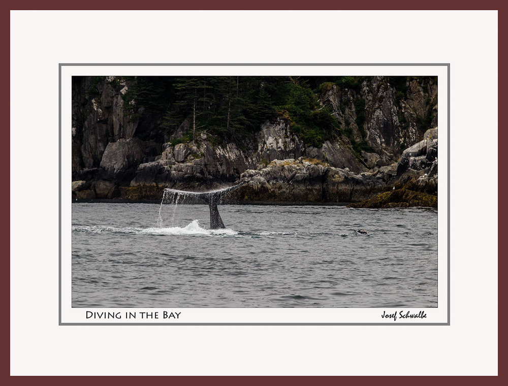 Whale11.jpg