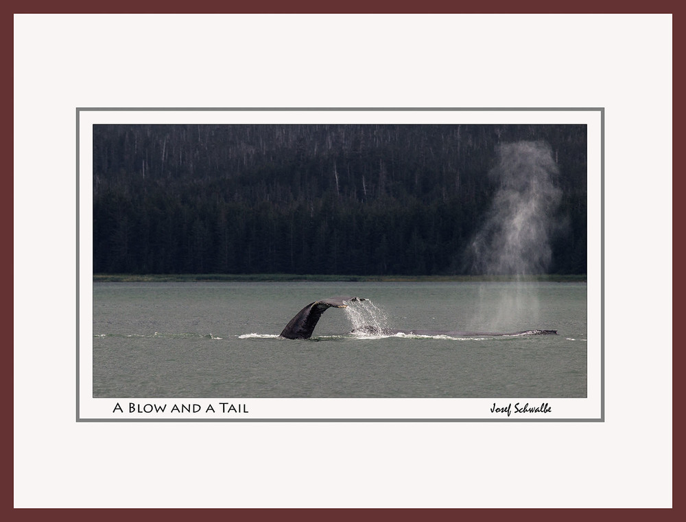 Whale12.jpg