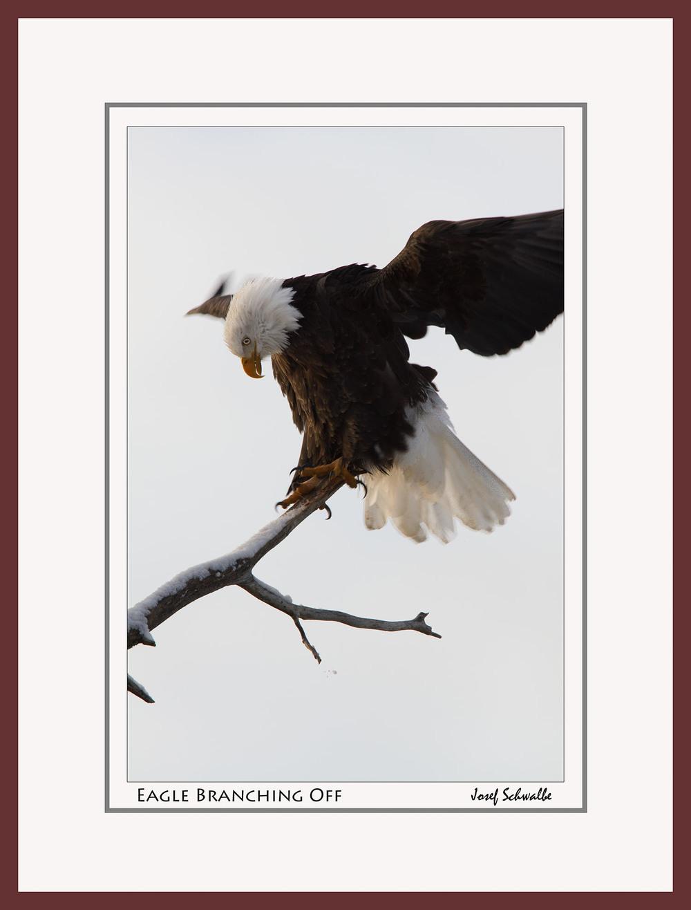 Eagle03.jpg