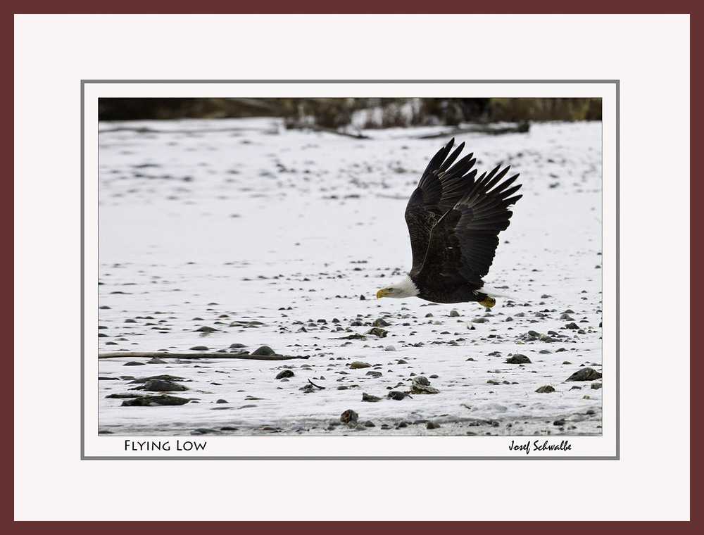 Eagle21.jpg