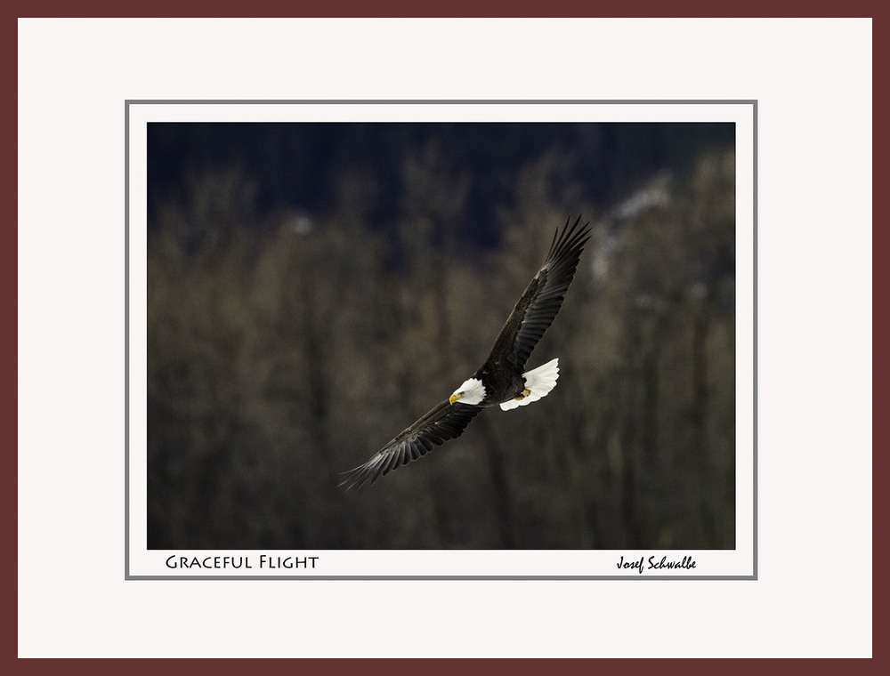 Eagle24.jpg