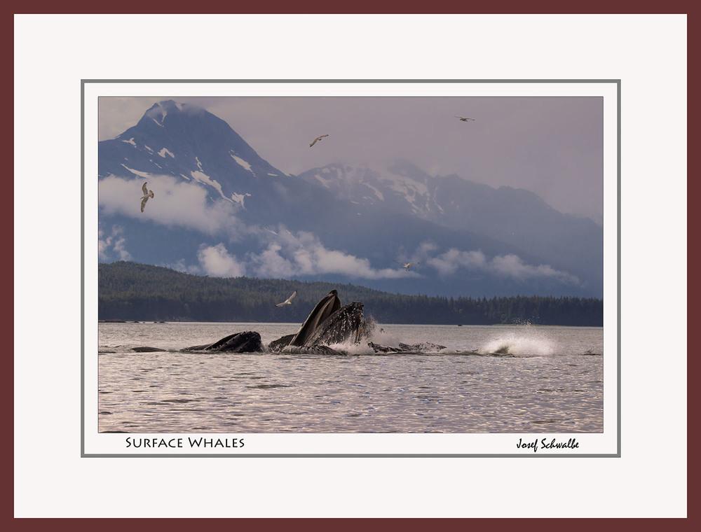 Whale05.jpg
