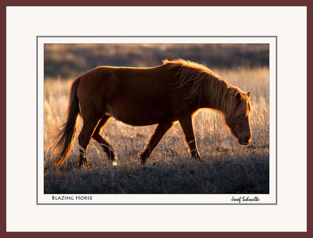 Blazing Horse