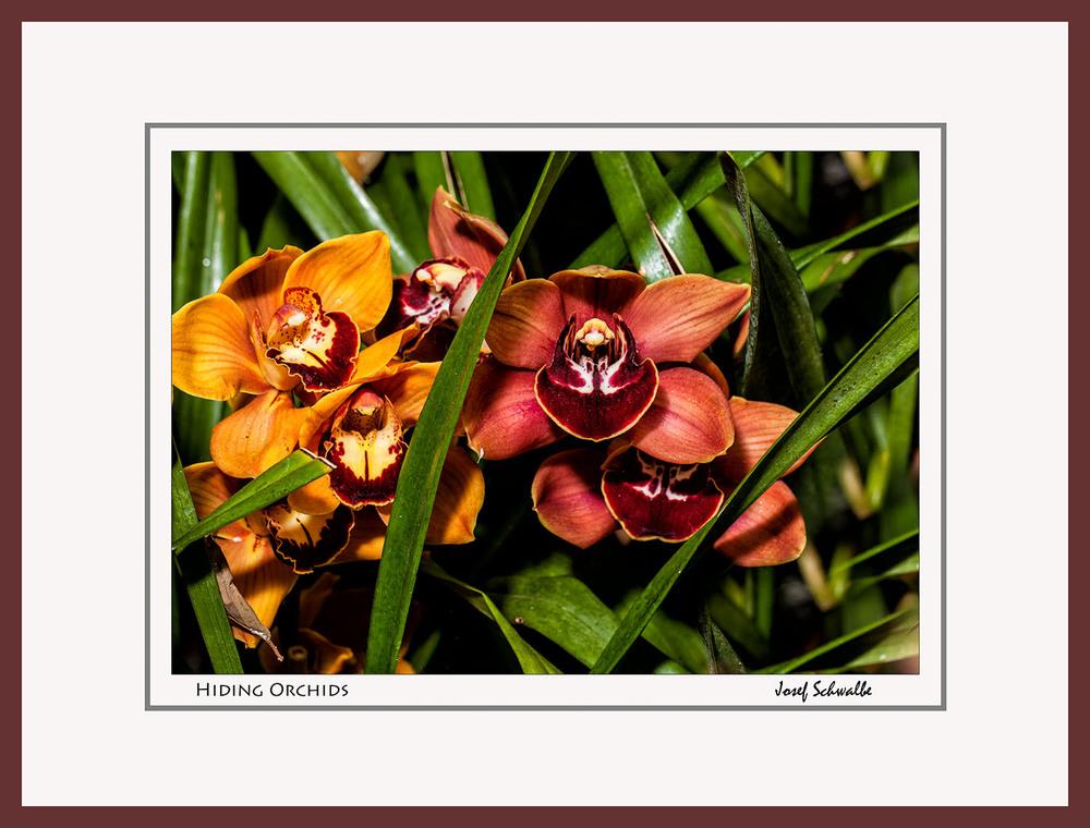 Hiding Orchids