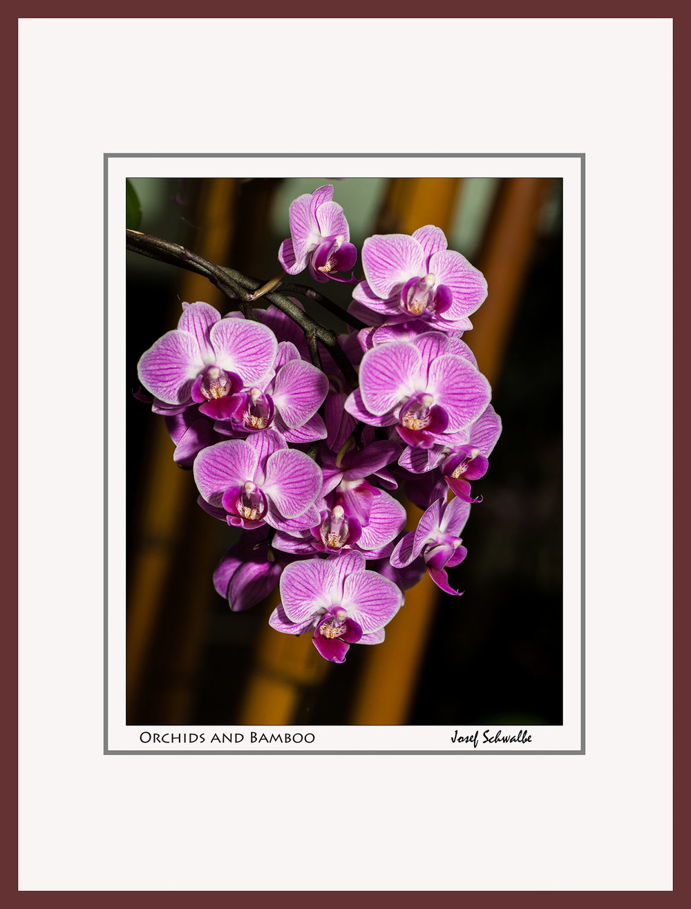 Orchids And Bamboo