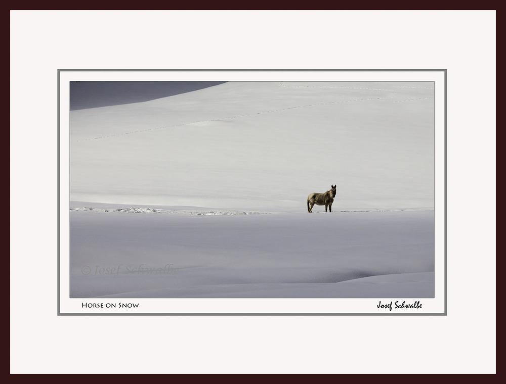 Horse On Snow
