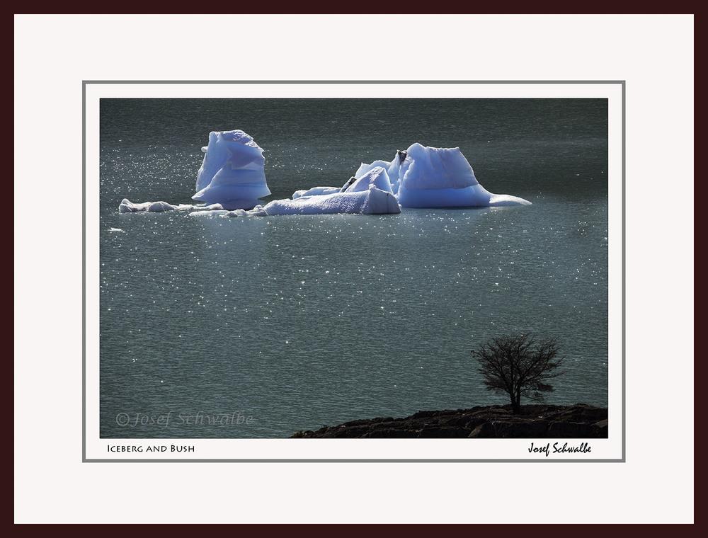 Iceberg and Bush