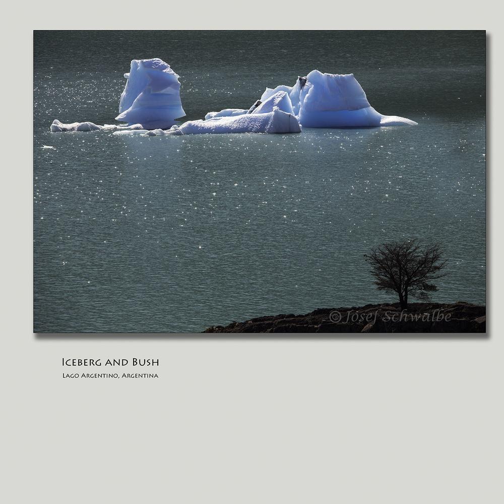 IcebergAndBush.jpg