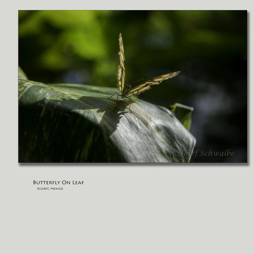 ButterflyOnLeaf.jpg