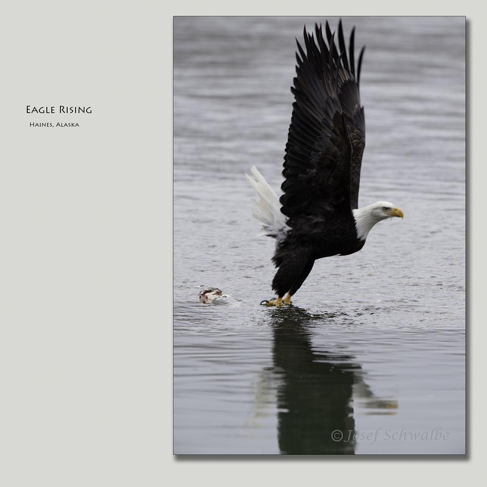 EagleRising.jpg