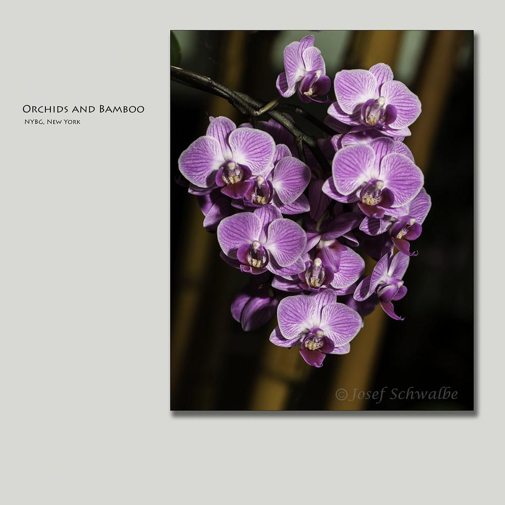 OrchidsAndBamboo.jpg