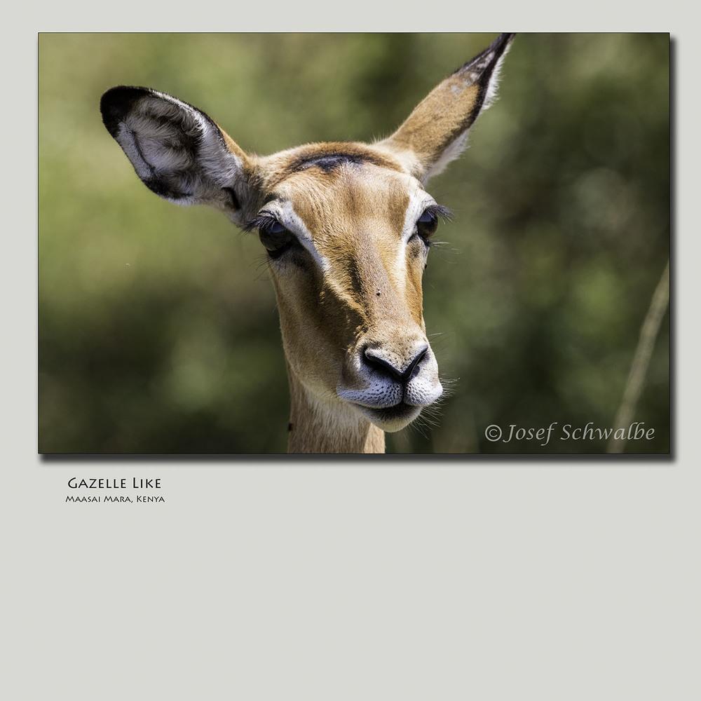 Gazelle Like