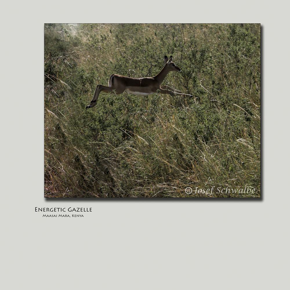 Energetic Gazelle