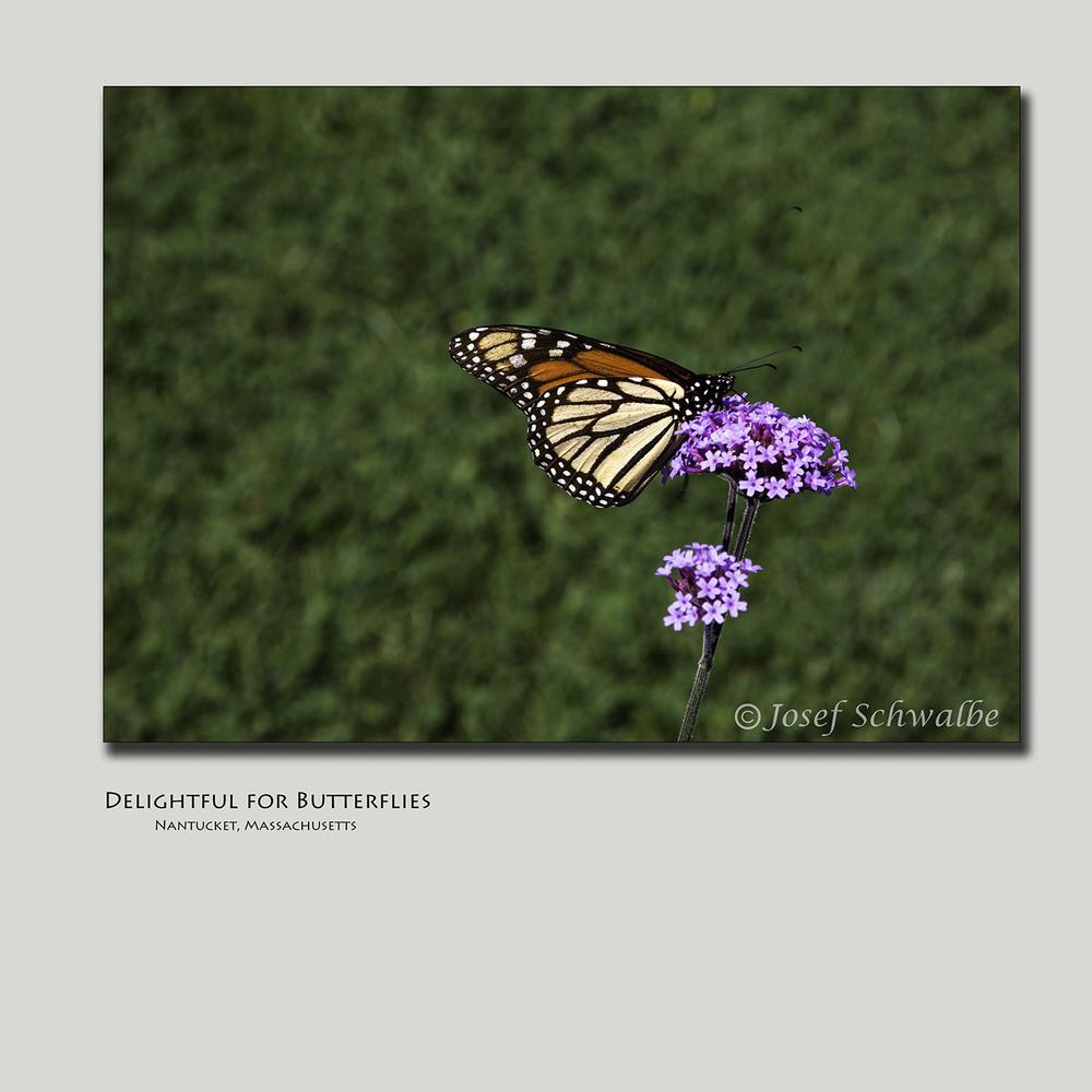 Delightful for Butterflies