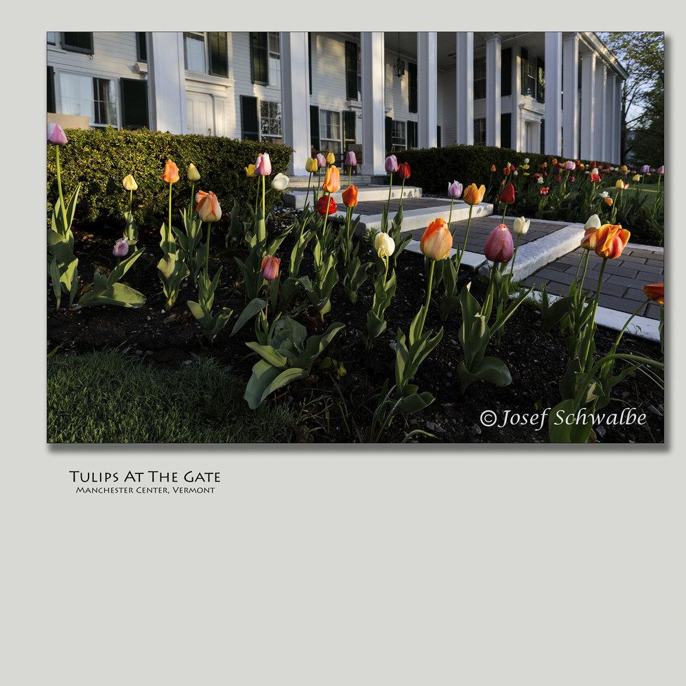 TulipsAtTheGate.jpg
