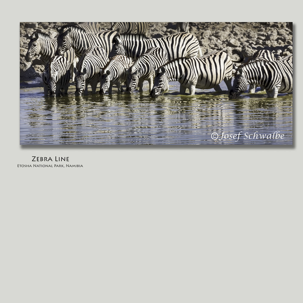ZebraLine.jpg
