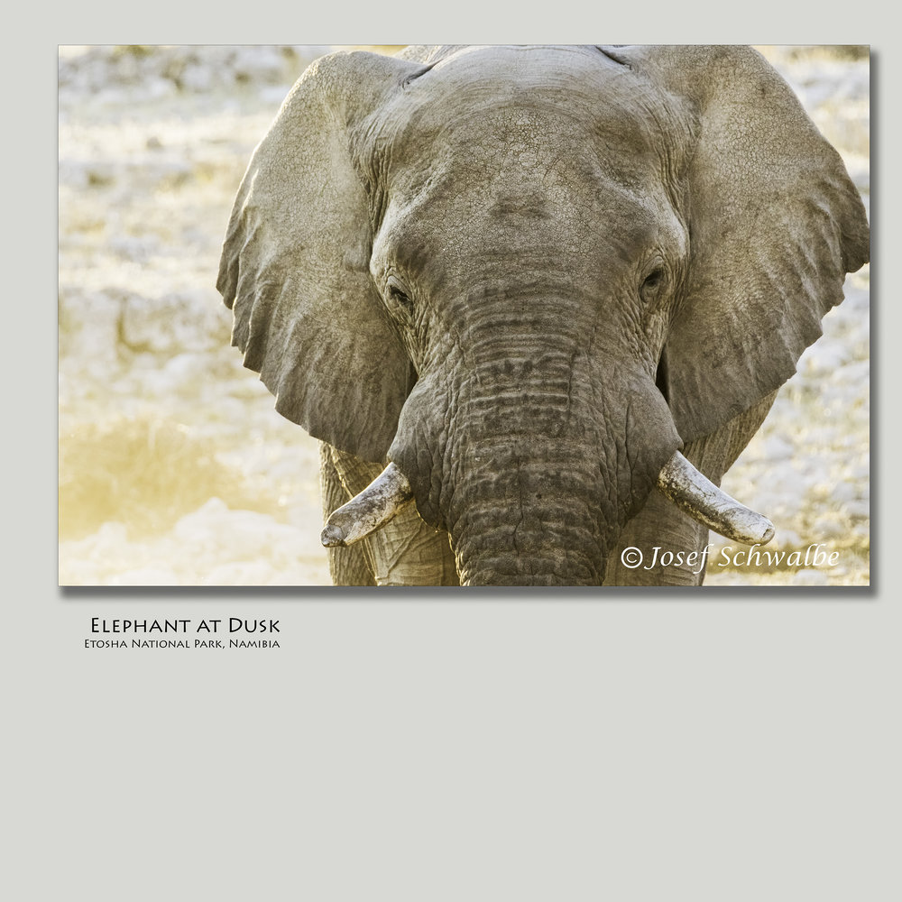 ElephantAtDusk.jpg