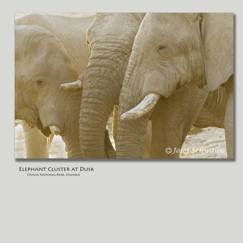 ElephantClusterAtDusk.jpg