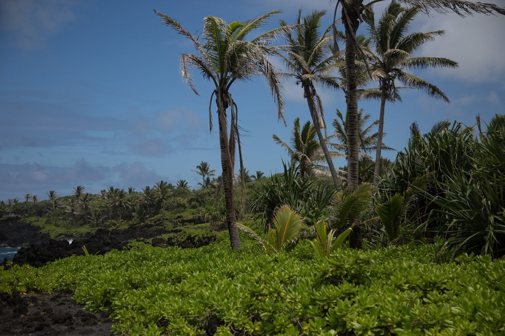 hawaii+road+to+hana-272.jpg