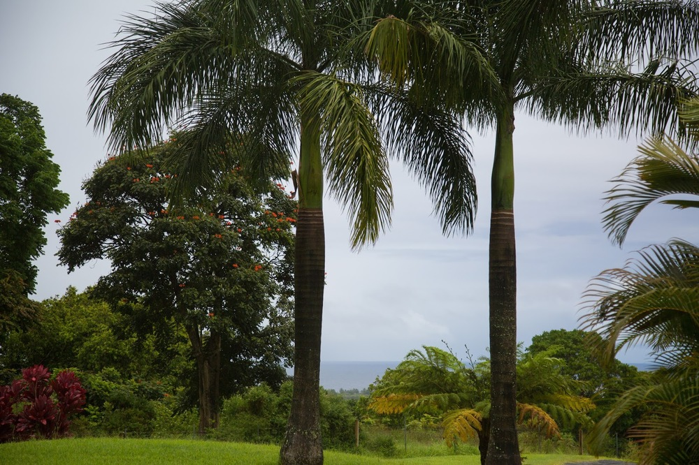 hawaii+road+to+hana-238.jpg