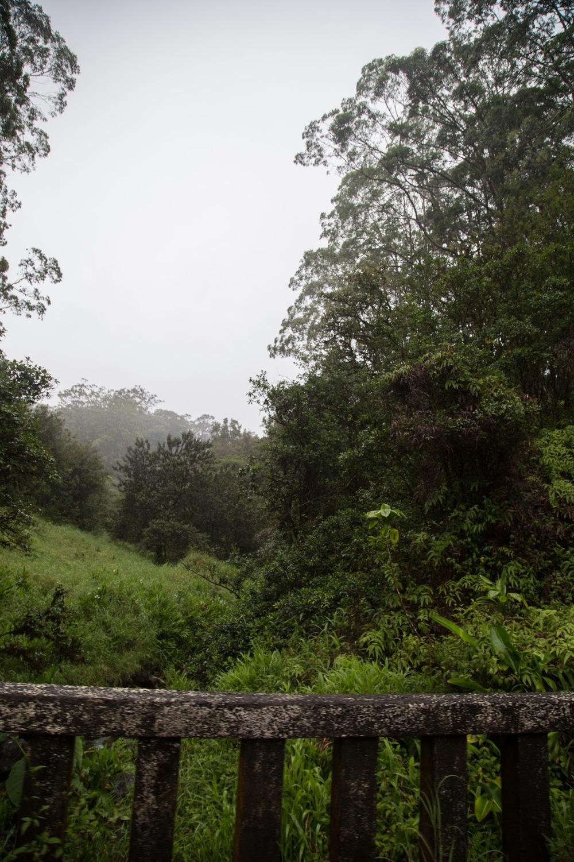 hawaii+road+to+hana-213.jpg