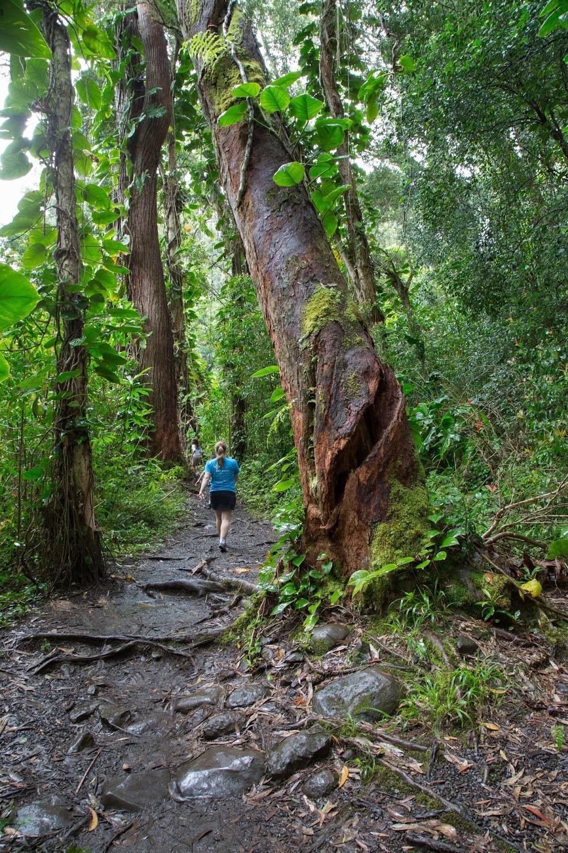 hawaii+road+to+hana-177.jpg