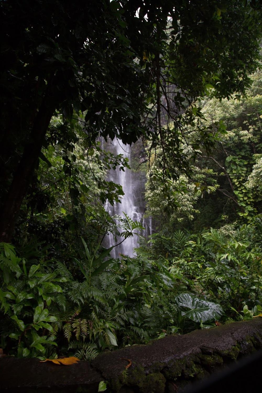 hawaii+road+to+hana-280.jpg