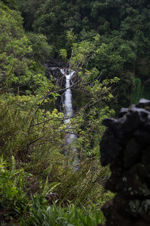 hawaii+road+to+hana-284.jpg
