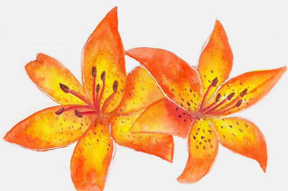"""See Me Glow"" - Tiger Lily sketch on sample Stillman and Birn sample paper of the beta series"
