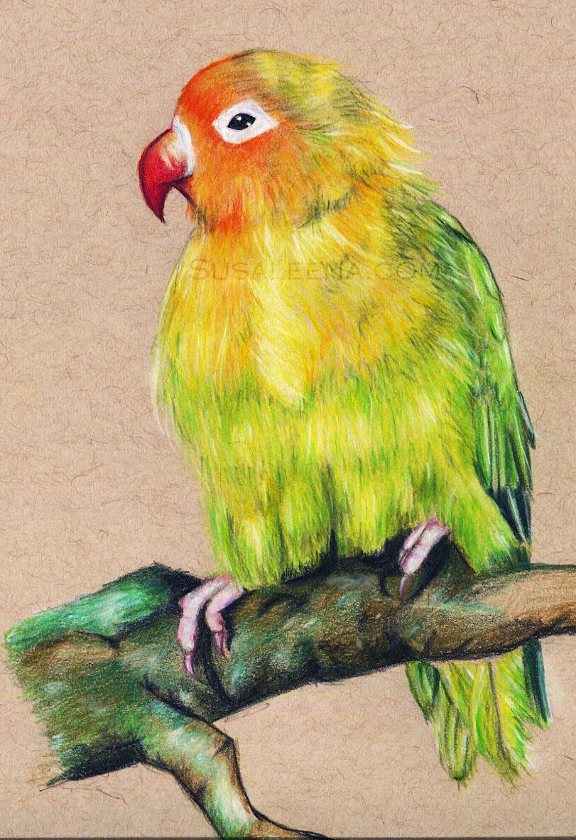 Lonely Lovebird