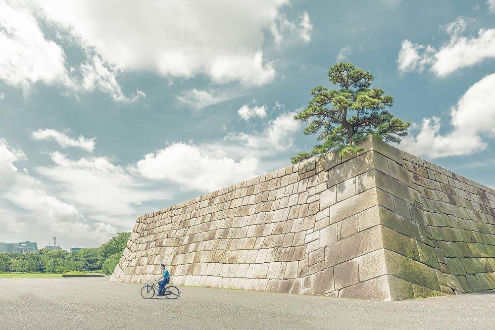 Tokyo_treewall_V2.jpg