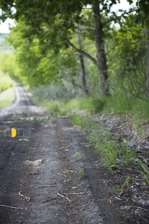 SaskatoonFarm3867.jpg