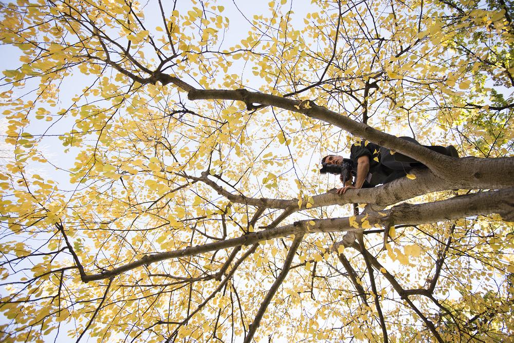 tree7509.jpg